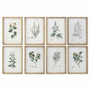 Cuadros enmarcados motivos botánicos