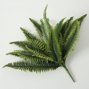 Planta helecho verde