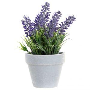 Planta lavanda lila maceta mini