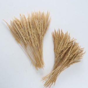 Ramas grano secas decorativas